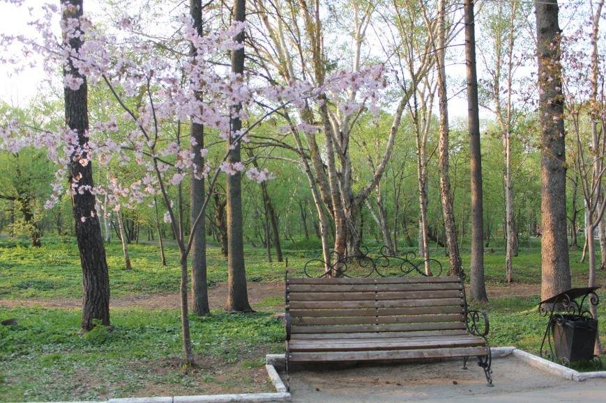 Прогулки по Южному продолжаются. День цветущей сакуры, фото-2