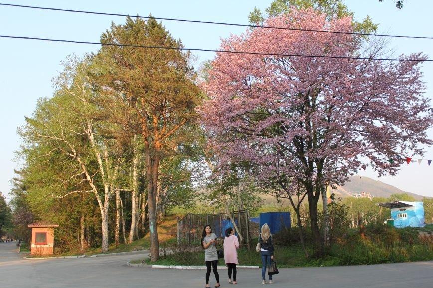 Прогулки по Южному продолжаются. День цветущей сакуры, фото-9
