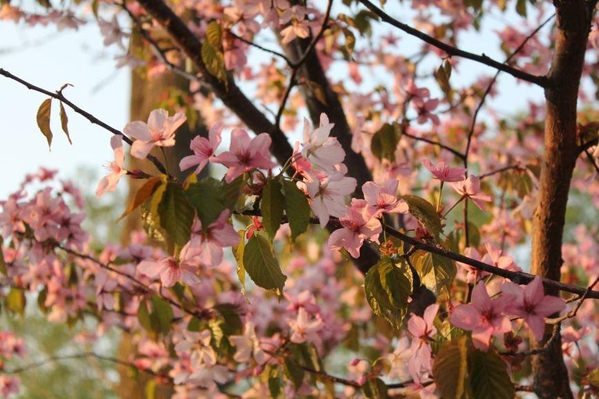 Прогулки по Южному продолжаются. День цветущей сакуры, фото-14