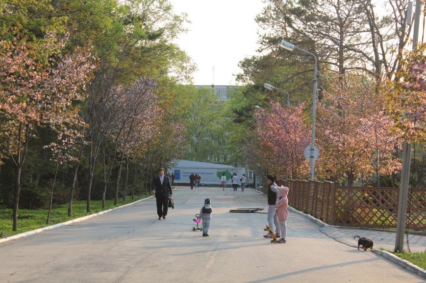 Прогулки по Южному продолжаются. День цветущей сакуры, фото-10