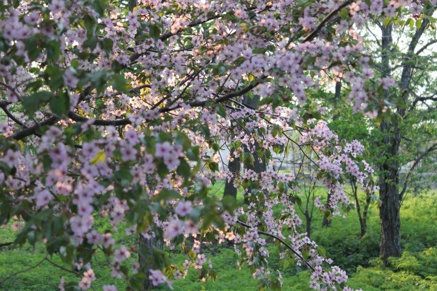 Прогулки по Южному продолжаются. День цветущей сакуры, фото-15
