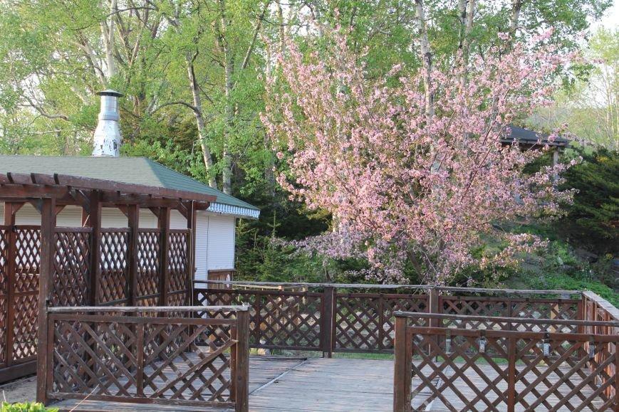 Прогулки по Южному продолжаются. День цветущей сакуры, фото-12