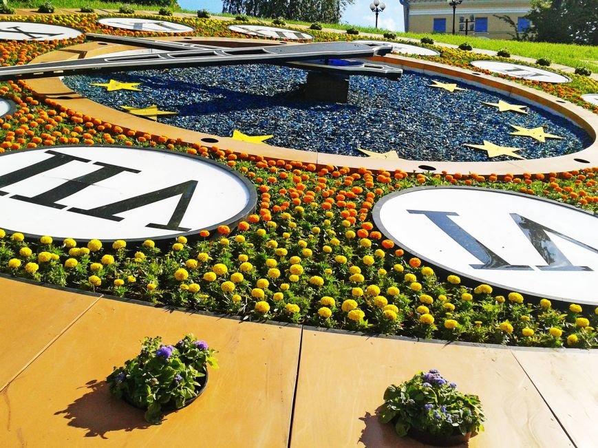 Возле цветочных часов на Майдане высадили тагетисы (ФОТОФАКТ), фото-3