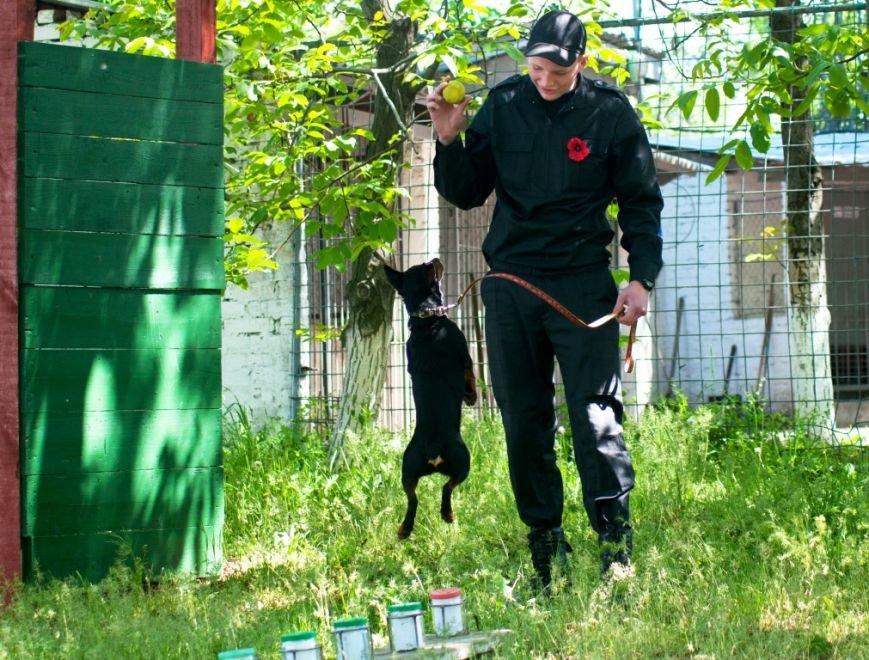 С пограничниками наравне несут службу и служебные собаки (фото), фото-1