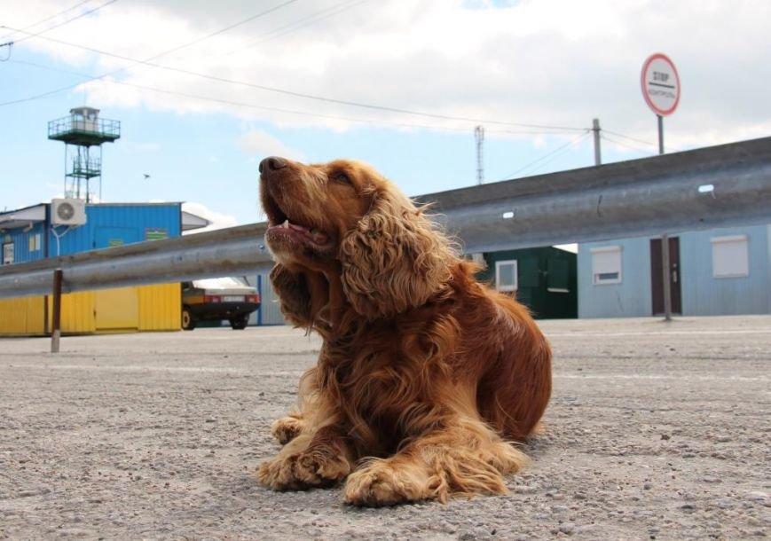 С пограничниками наравне несут службу и служебные собаки (фото), фото-3