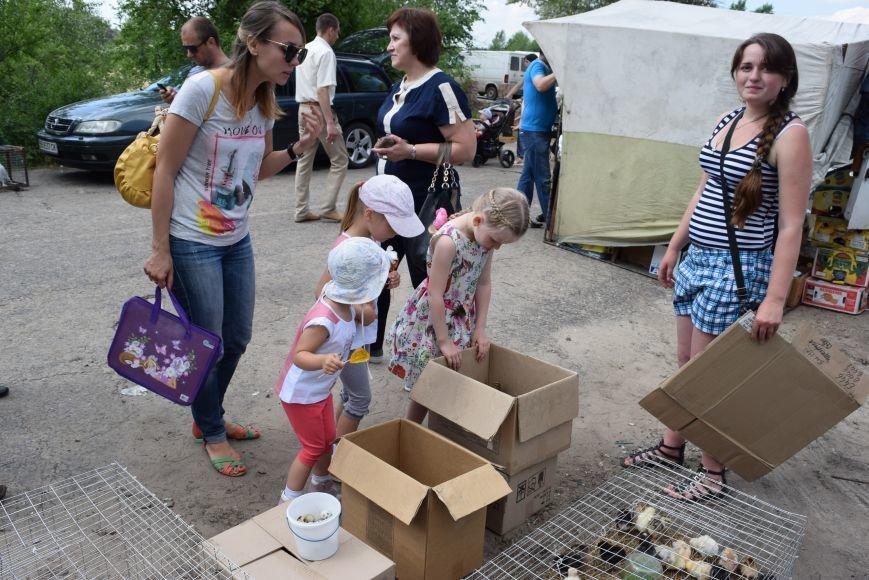 В Северодонецке прошла выставка голубей (ФОТО), фото-3