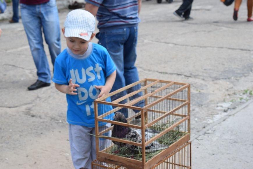 В Северодонецке прошла выставка голубей (ФОТО), фото-1