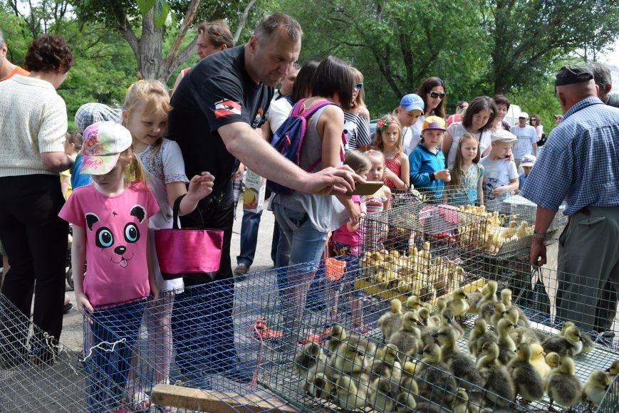 В Северодонецке прошла выставка голубей (ФОТО), фото-4