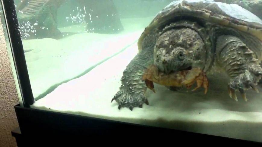 На территории Театра морских животных «Акватория» открылась первая в Крыму черепашья ферма, фото-4