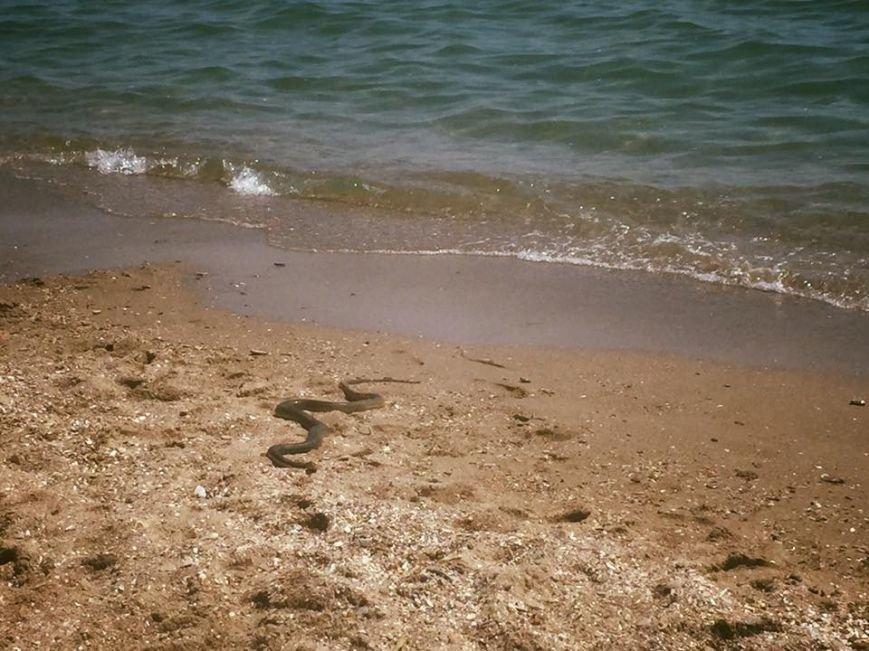 В Черноморске на пляже была обнаружена змея (+фото), фото-1