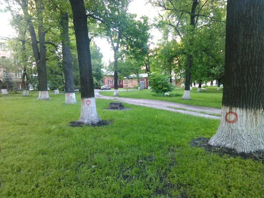 Помеченные деревья за больницей №1 сносить не будут, фото-1