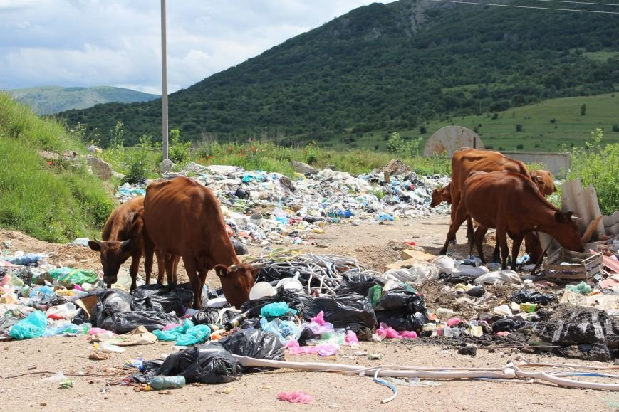На «невидимой» для властей огромной свалке под Симферополем питаются коровы (ФОТО), фото-6