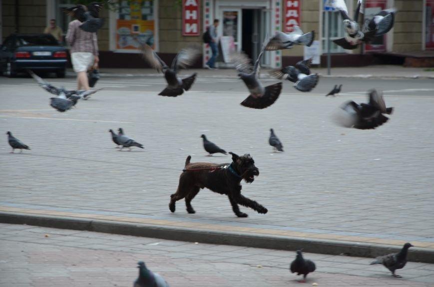 Фотопятница: Движение Мариуполя, фото-8