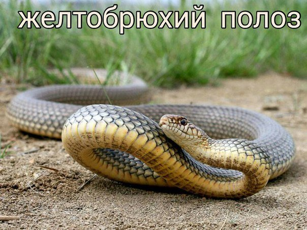 Змеи в Черноморске: советы специалиста (+фото), фото-1