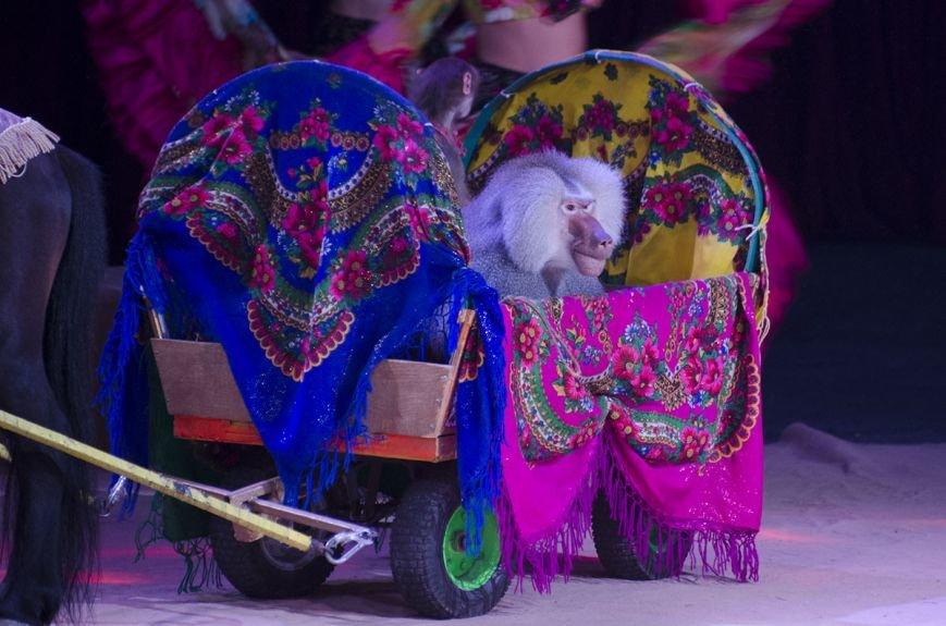В Каменском состоялась премьера шоу нового поколения «Ангелы цирка» от цирка «Кобзов», фото-8