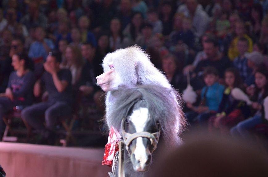В Каменском состоялась премьера шоу нового поколения «Ангелы цирка» от цирка «Кобзов», фото-9
