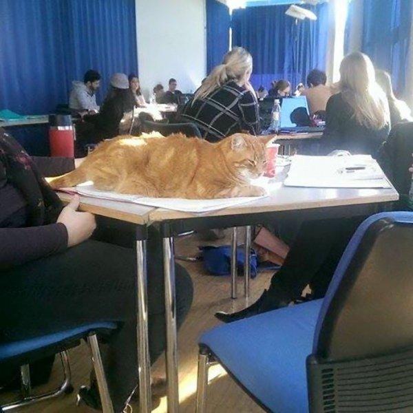 Фото: в німецькому університеті з'явився кіт-студент, фото-1