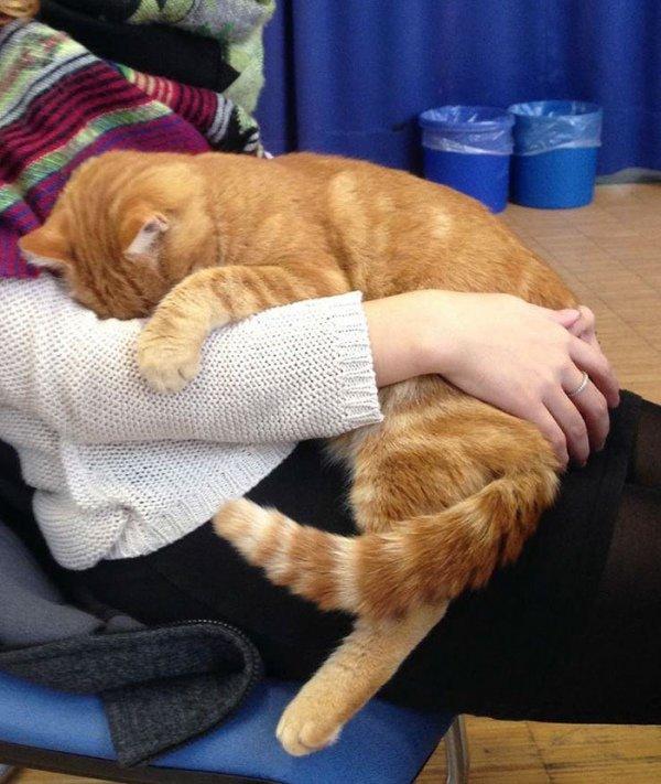 Фото: в німецькому університеті з'явився кіт-студент, фото-2