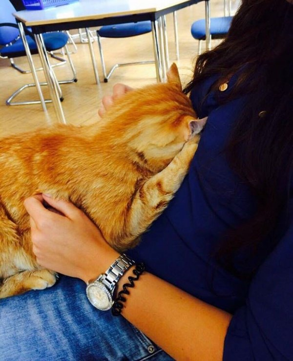Фото: в німецькому університеті з'явився кіт-студент, фото-3