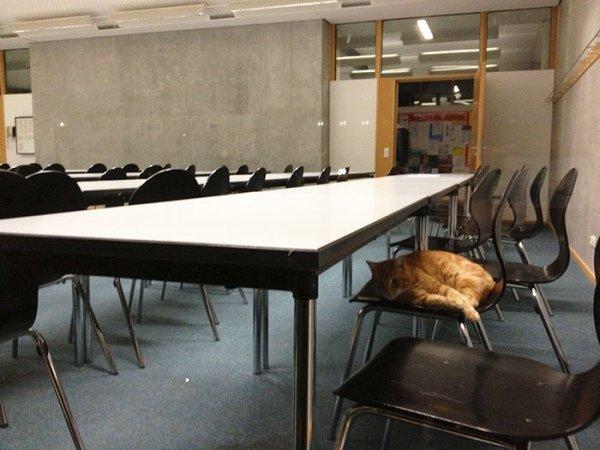 Фото: в німецькому університеті з'явився кіт-студент, фото-4