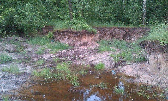 В Черниговской области незаконно вывезли песок и уничтожили 2 гектара леса, фото-3