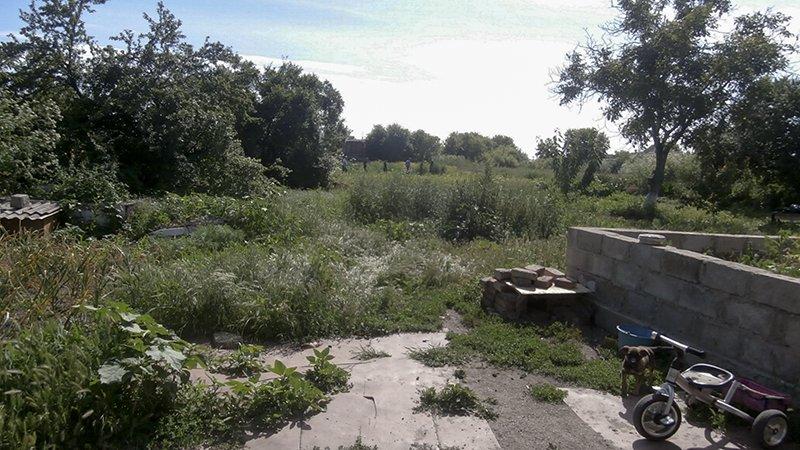 На огороде у ялтанки среди кукурузы  росла конопля (ФОТО), фото-1