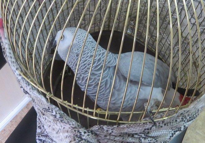 На крымской границе «развернули» двух попугаев и черепаху из Украины (ФОТО), фото-1