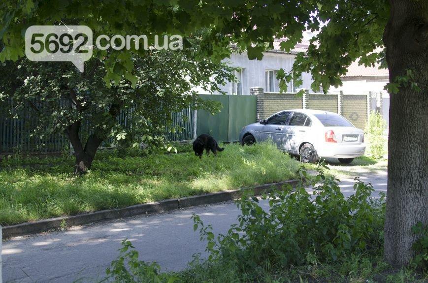 """В Каменском уголовник, освобожденный по """"закону Савченко"""", совершил убийство из ревности, фото-1"""