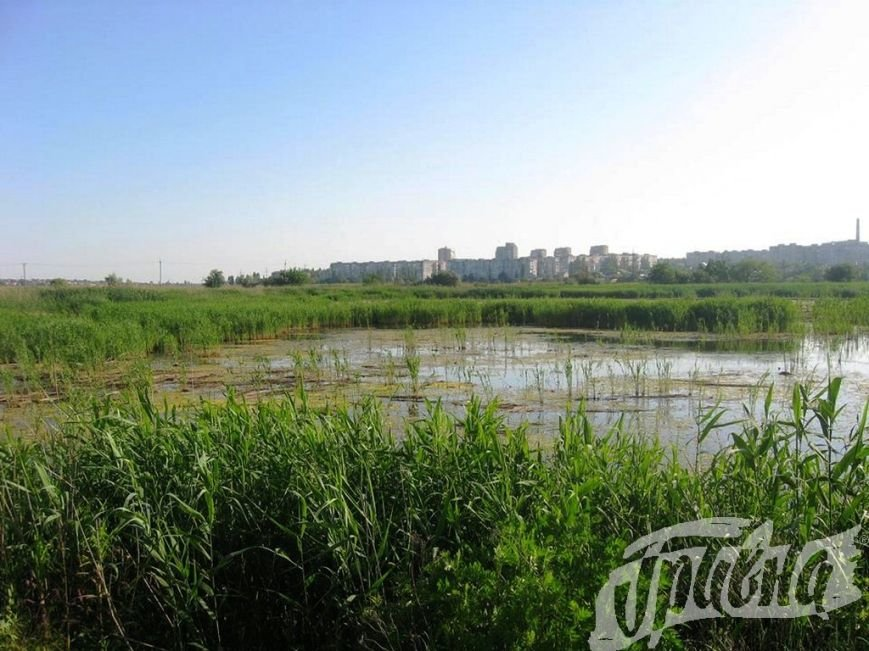 Река Веревчина в Херсоне превращается в гнилую сточную канаву (фото), фото-2