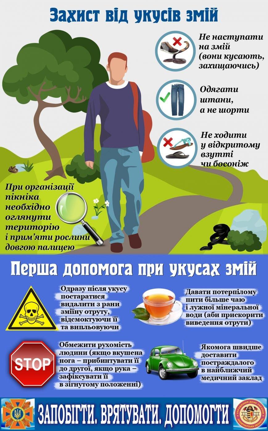 Як закарпатцям вберегтись від укусів змій: інфографіка, фото-1