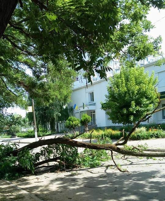 Сегодня в Херсоне на проезжую часть упало дерево (фото), фото-1