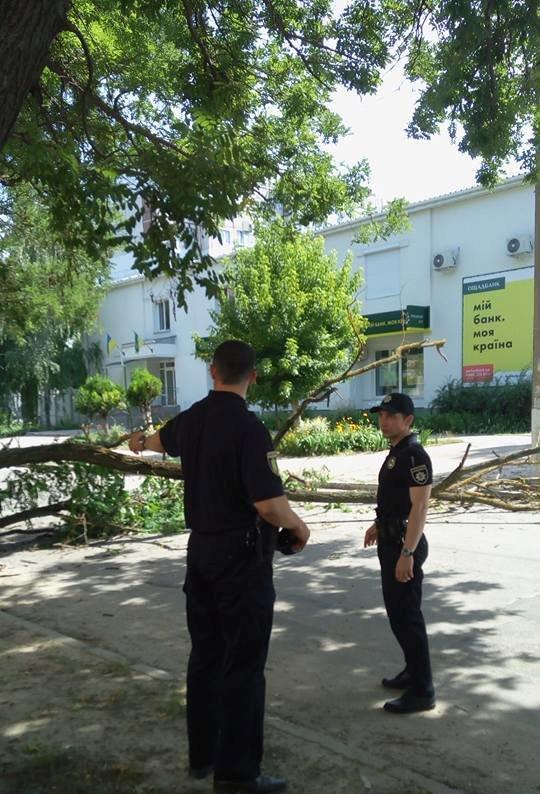 Сегодня в Херсоне на проезжую часть упало дерево (фото), фото-3