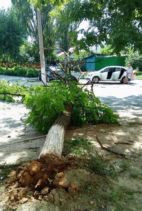 Сегодня в Херсоне на проезжую часть упало дерево (фото), фото-2