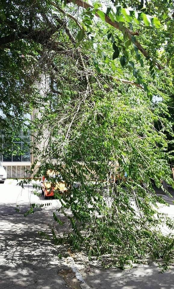 В Херсоне огромная ветка дерева упала на проезжую часть (фото), фото-1