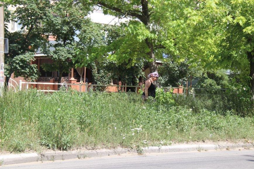 Шуменский: трава у дома, зелёная, зелёная трава (фото), фото-4