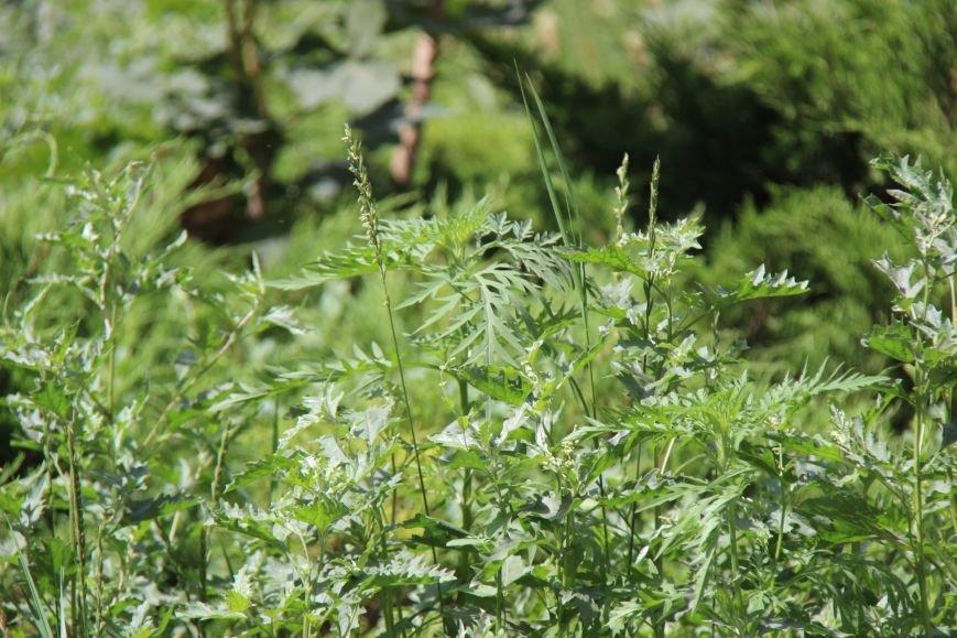 Шуменский: трава у дома, зелёная, зелёная трава (фото), фото-2