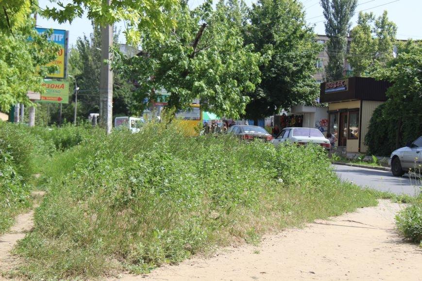 Шуменский: трава у дома, зелёная, зелёная трава (фото), фото-1