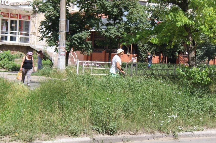 Шуменский: трава у дома, зелёная, зелёная трава (фото), фото-3