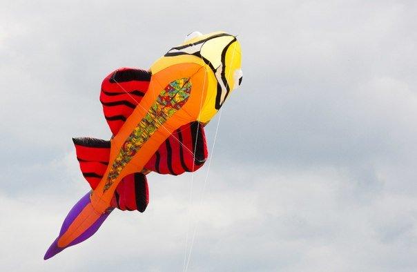 Фестиваль воздушных змеев в пушкине2