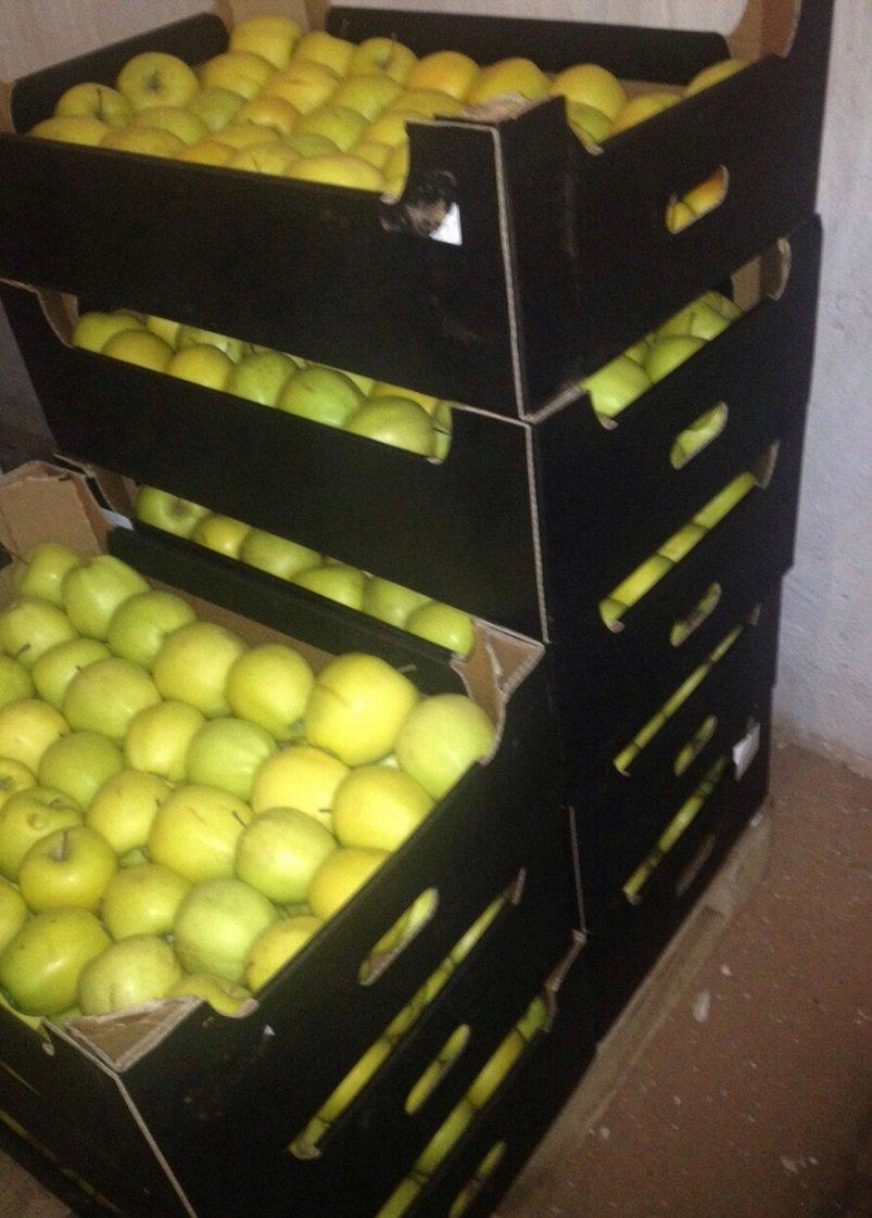 В Симферополе уничтожили более 70 кг польских яблок, найденных на складе в Севастополе (ФОТО), фото-1