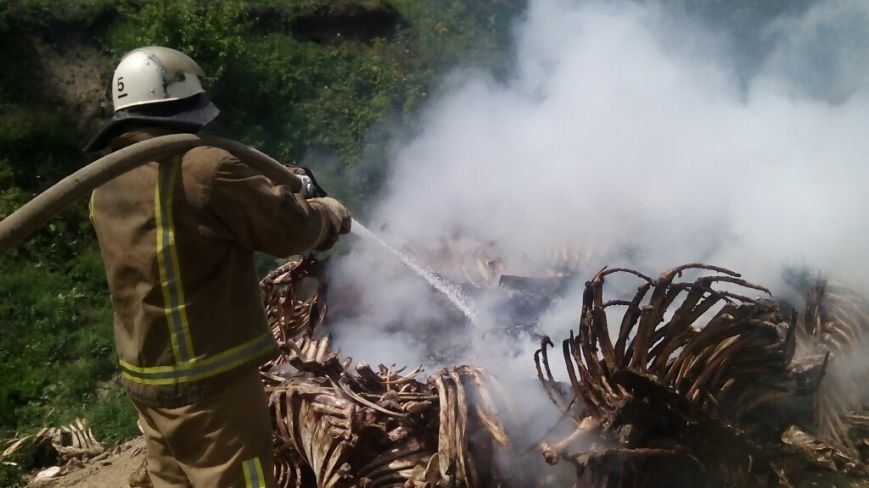 Фотофакт: в районі горів нелегальний скотомогильник, фото-3