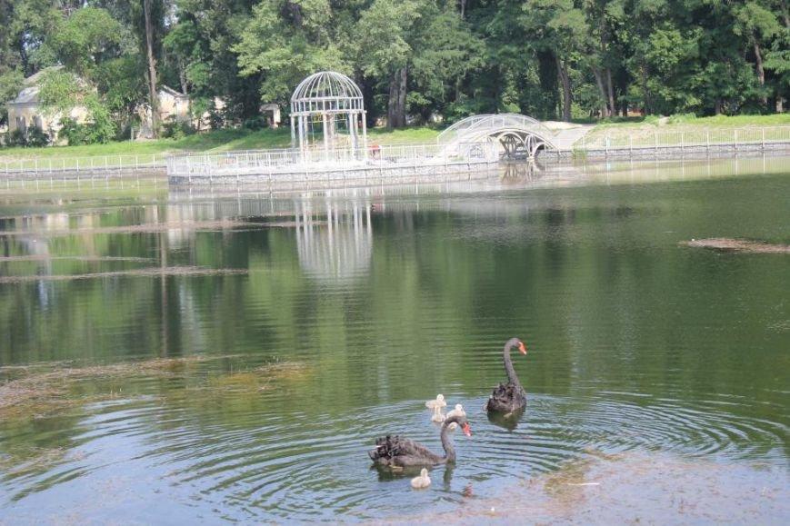 Строители в очередной раз планируют почистить озеро и установить скамейки в Городском саду до конца года (ФОТО), фото-4