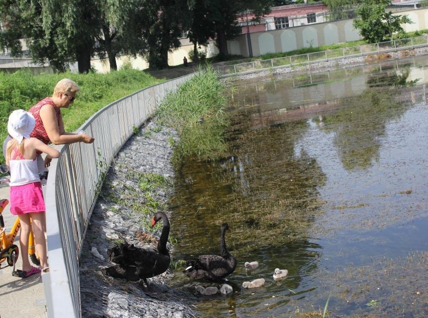 Строители в очередной раз планируют почистить озеро и установить скамейки в Городском саду до конца года (ФОТО), фото-3