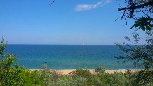 """В Черноморске на пляже """"Чайка"""" был обнаружен погибший дельфин, фото-1"""
