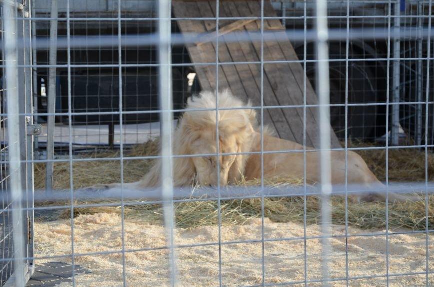 Тысячи мариупольцев увидели ангелов цирка, белого льва, тигра и трюки на высоте (ФОТО+ВИДЕО), фото-33