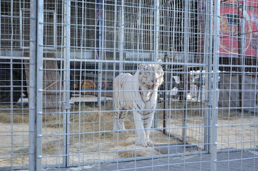 Тысячи мариупольцев увидели ангелов цирка, белого льва, тигра и трюки на высоте (ФОТО+ВИДЕО), фото-34