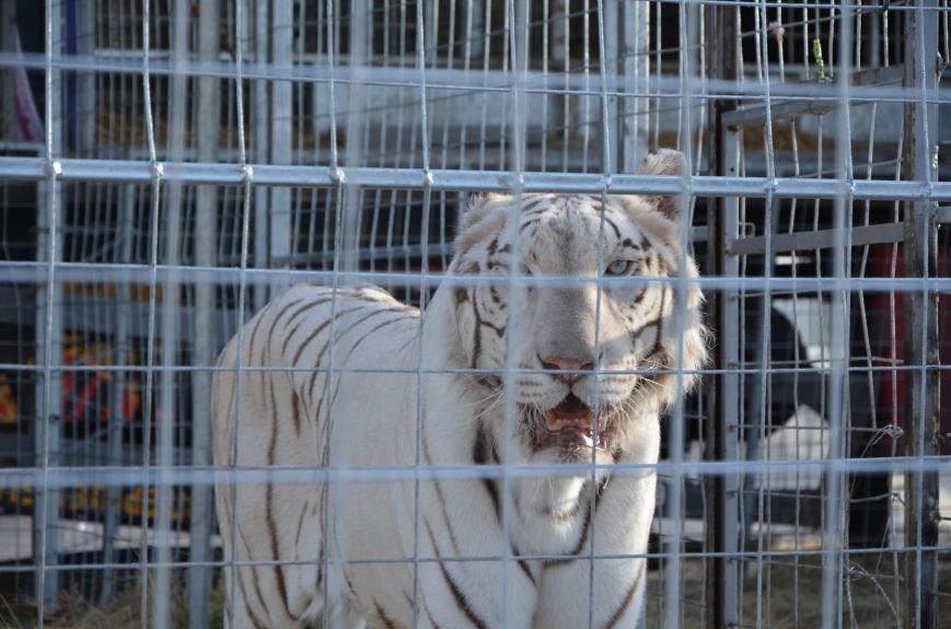 Тысячи мариупольцев увидели ангелов цирка, белого льва, тигра и трюки на высоте (ФОТО+ВИДЕО), фото-35