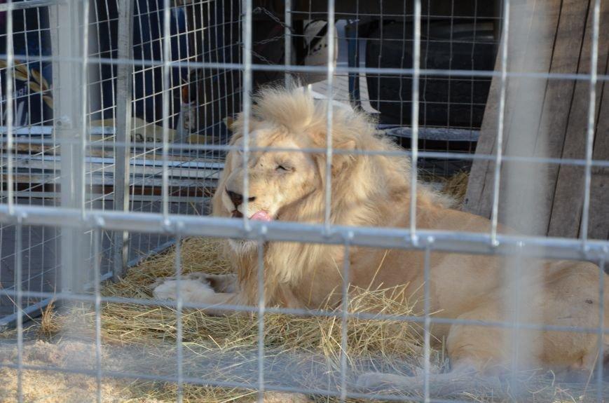 Тысячи мариупольцев увидели ангелов цирка, белого льва, тигра и трюки на высоте (ФОТО+ВИДЕО), фото-36