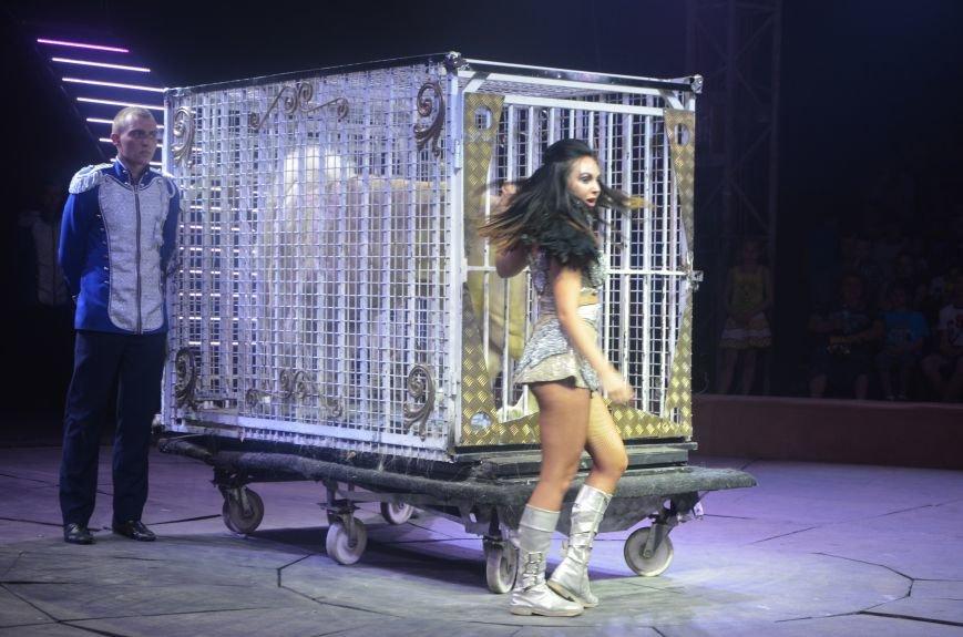 Тысячи мариупольцев увидели ангелов цирка, белого льва, тигра и трюки на высоте (ФОТО+ВИДЕО), фото-18
