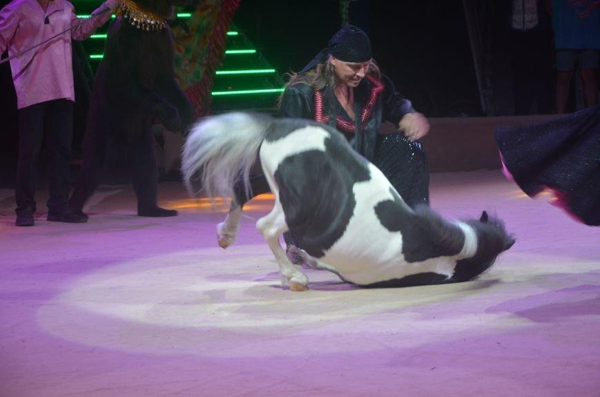 Тысячи мариупольцев увидели ангелов цирка, белого льва, тигра и трюки на высоте (ФОТО+ВИДЕО), фото-12